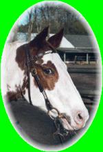 Gesundheitsvorsorge für Pferde