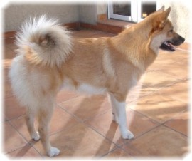 Hund Ole